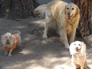 three camping dogs