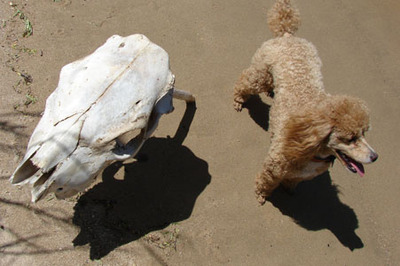 dog with skull #2