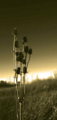fiori-spine-beige